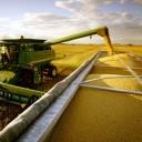 Vendas externas de milho disparam em julho e têm alta 122%